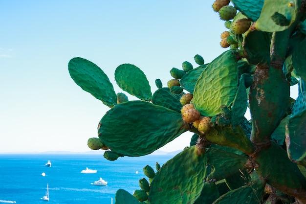 Кактус опунция с цветами на фоне синего моря Premium Фотографии