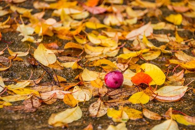 黄色のカエデの葉とりんご。秋の公園 Premium写真