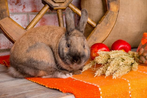 秋の装飾が施されたかわいい小さなウサギ。ウサギ。 Premium写真