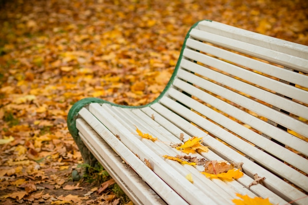 秋の公園の白いベンチ。 Premium写真