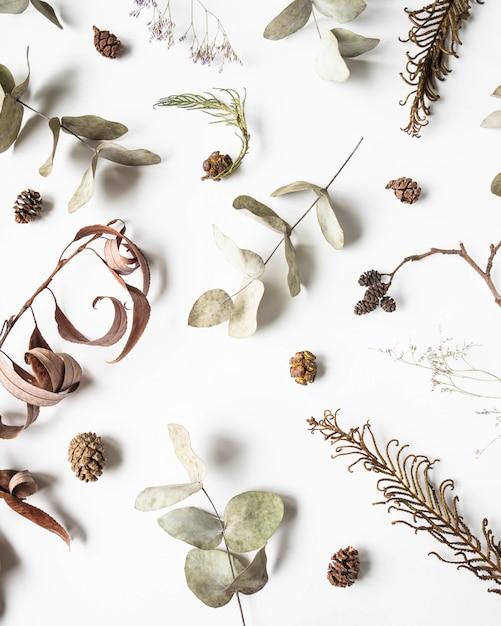 冬の乾燥した植物の部分-アルダー、シダ、ユーカリ、柳のフラットレイアウト創造的な自然な背景 Premium写真