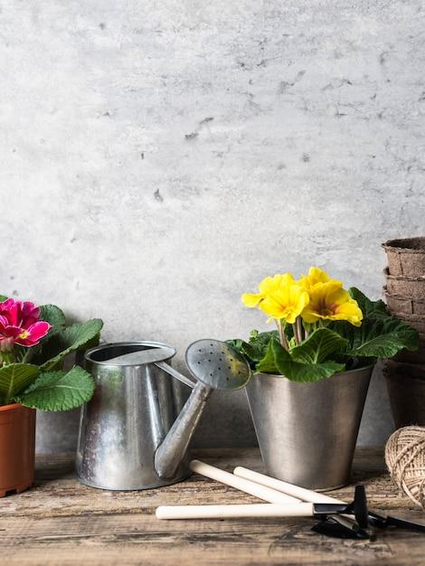 ポットと木製の素朴なテーブルの園芸工具のサクラソウの花と組成。 Premium写真