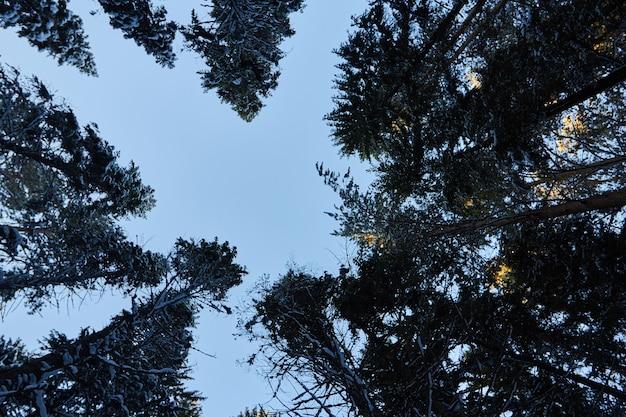 暗い森、クリスマス前に森の中を歩く Premium写真