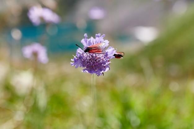 コーカサス山脈の斜面に生えている珍しい山の花と植物 Premium写真