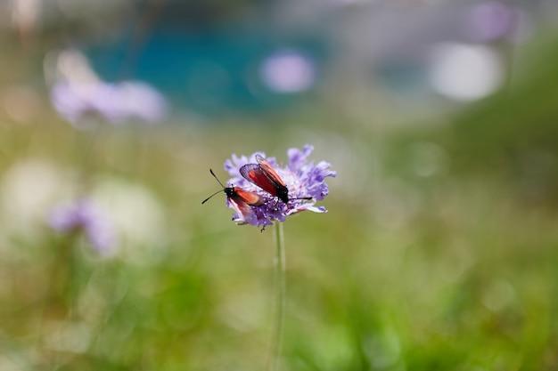 晴れた夜明けのコーカサス山脈の斜面に生える珍しい山の花と植物 Premium写真