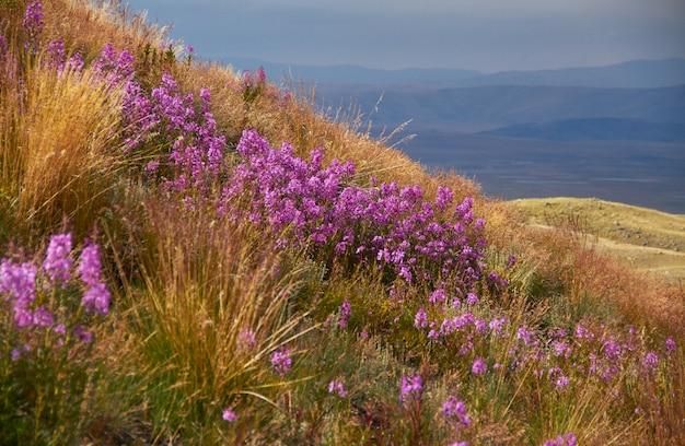 フィールドの美しい花、草原の夕日、雲と美しい夕方の空 Premium写真