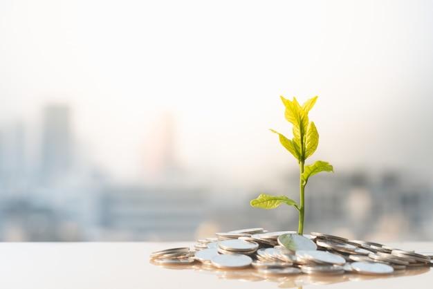 経済成長、都市景観の背景を持つ山のコインの植物 Premium写真