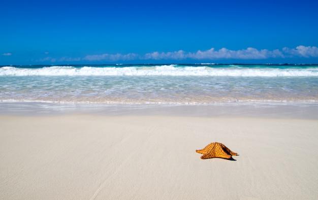 ヒトデとビーチ Premium写真