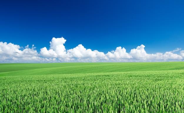 緑の野原と青い空 Premium写真