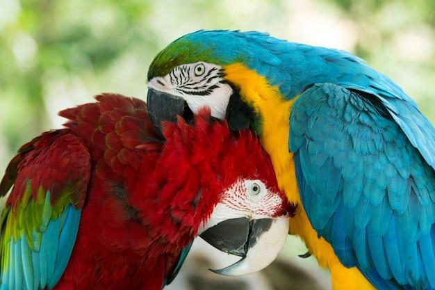 Попугаи Premium Фотографии