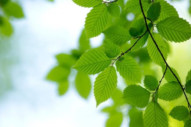 Естественный зеленый фон Premium Фотографии
