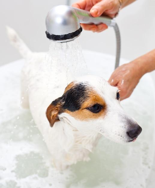 犬のバスタブで入浴 Premium写真