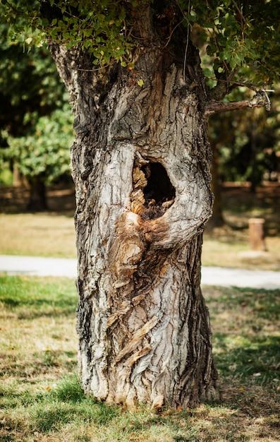 くぼみのある公園の木 Premium写真
