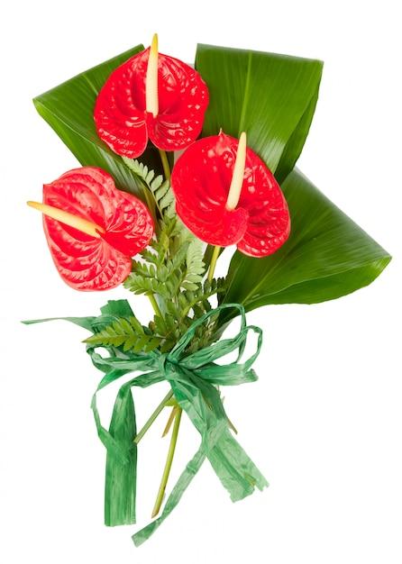 赤いアンスリウムの花 Premium写真