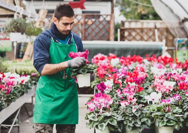 温室でシクラメンの花を植える若い庭師。 Premium写真