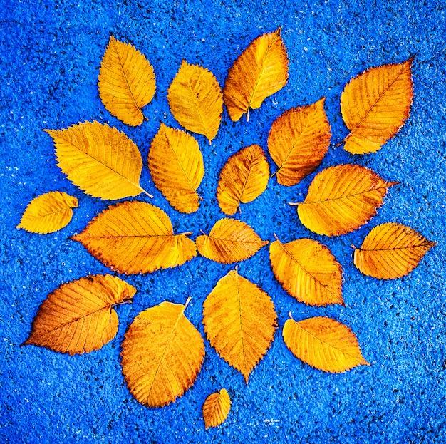 黄色いイチョウ葉の青い背景 Premium写真