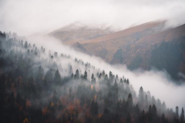 自然の中の霧 Premium写真