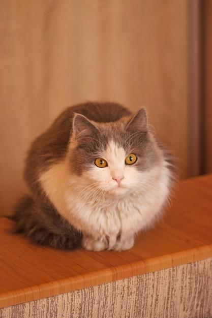 美しい白灰色の猫 Premium写真