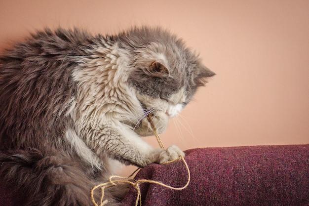 おもちゃで遊ぶ子猫、遊び心のある猫をかじるまたはワイヤーを食べる Premium写真