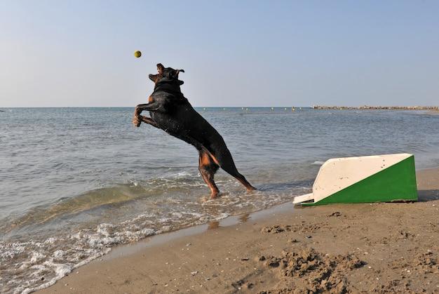 Флайбол на пляже Premium Фотографии