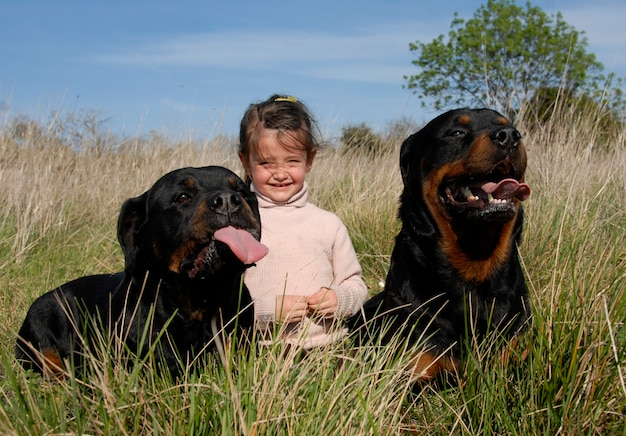 Опасные собаки и ребенок Premium Фотографии