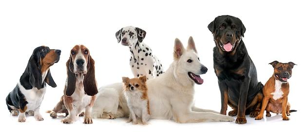 犬のグループ Premium写真