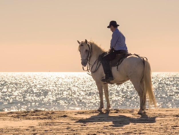 Всадник на пляже Premium Фотографии