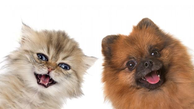 子猫と子犬 Premium写真