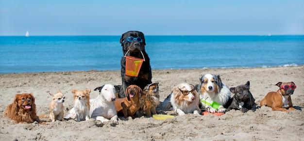 Собаки на пляже Premium Фотографии