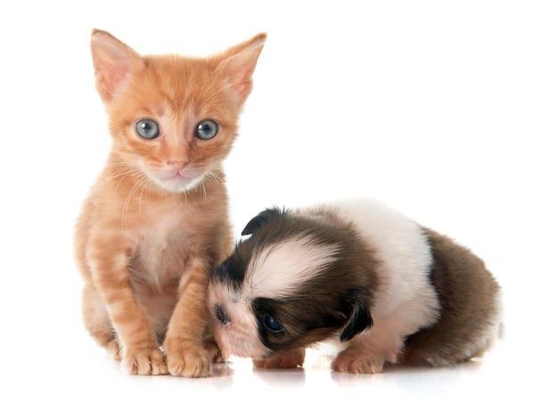 子犬しずと子猫 Premium写真