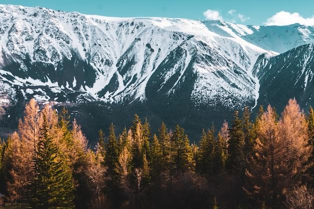 Невероятный пейзаж с деревьями на фоне заснеженных вершин алтая Premium Фотографии