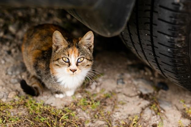 通りを散歩するための避難所で品種のないホームレスの猫 Premium写真