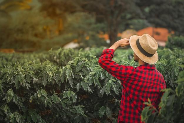 Фермер на пшеничном кофейном поле Premium Фотографии