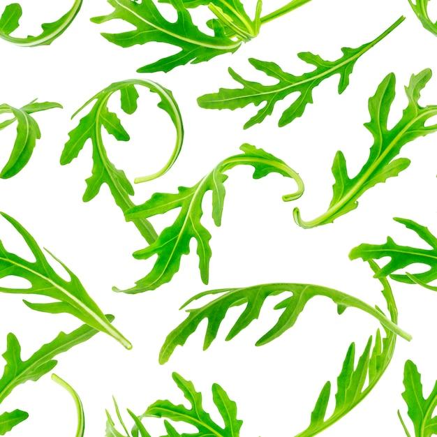 ルコラのシームレスなパターン。 Premium写真