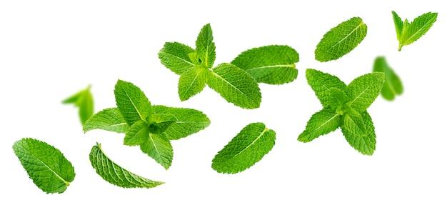 Листья свежей мяты, листья мяты перечной, изолированные на белом фоне Premium Фотографии
