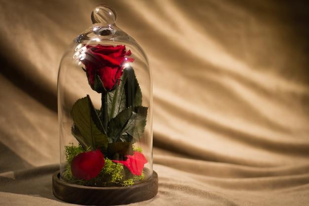 Цветок розы украшен в стеклянной посуде Premium Фотографии