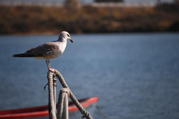 水上ボート間のカモメ Premium写真