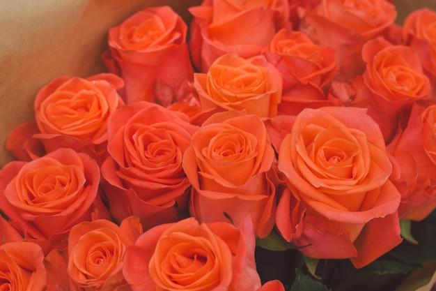オレンジ色のバラの花のつぼみ Premium写真