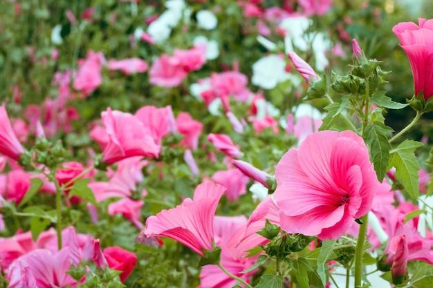 庭の鮮やかなピンクの花 Premium写真