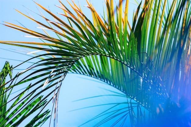 Размытый фон с пальмовых листьев Premium Фотографии