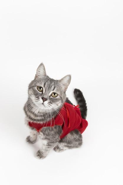 猫のための赤い医療毛布の猫、白の分離 Premium写真