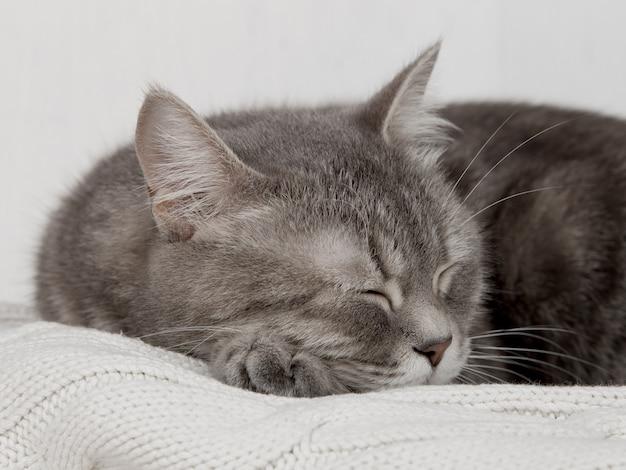 Две серые кошки спят вместе, обнимаются и заботятся. прояви нежность, ляг на мягкий белый вязаный свитер. Premium Фотографии