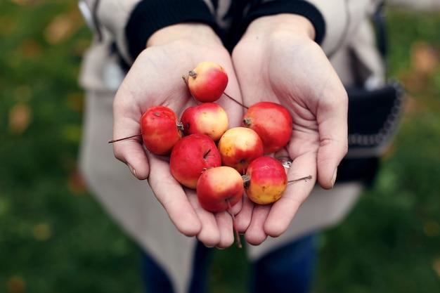 女の子の手の中の野生のミニりんご。 Premium写真