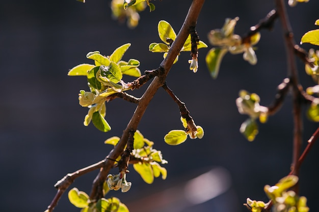 春枝、若い葉および腎臓 Premium写真