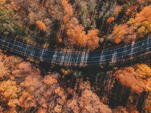Аэрофотоснимок густой лес осенью с дороги резки до конца. россия, санкт-петербург Premium Фотографии