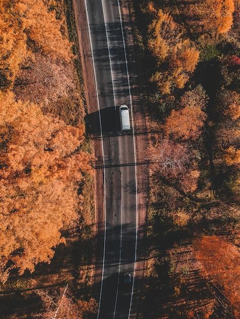 Аэрофотоснимок дороги в красивый осенний лес. красивый пейзаж с пустой сельской дороге, деревья с красными и оранжевыми листьями. шоссе через парк. вид с летающего беспилотника. россия, санкт-петербург Premium Фотографии