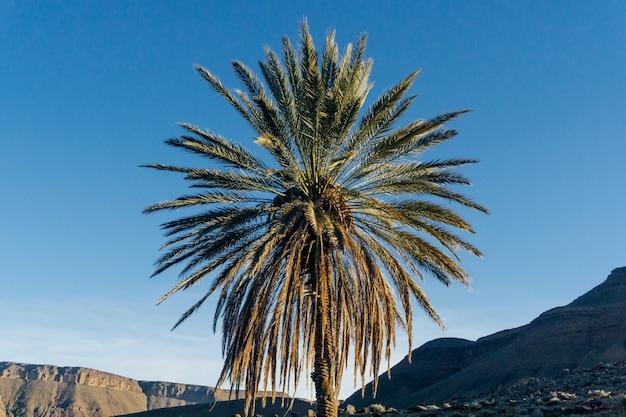 青い空を背景のヤシの木 Premium写真