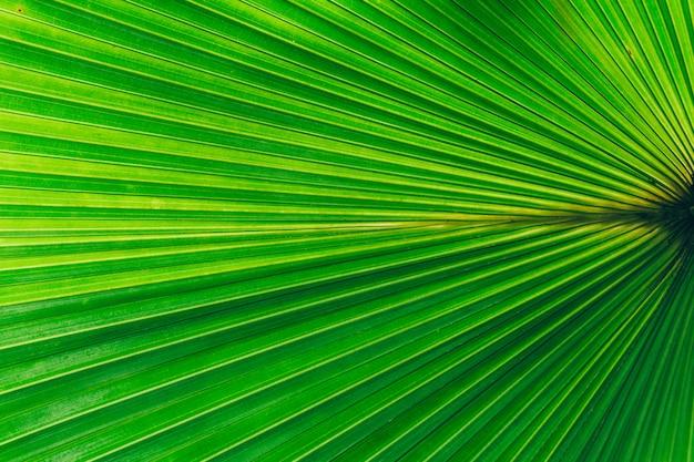 ジャングルの植物の背景。熱帯の茂みやジャングルの中で茂み。 Premium写真