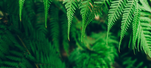 Фон растения джунглей. тропические заросли и кустарники в джунглях. Premium Фотографии