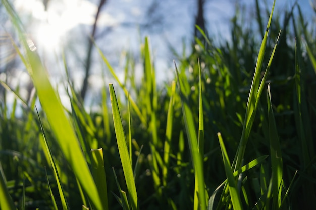 Зеленая трава на солнце Premium Фотографии